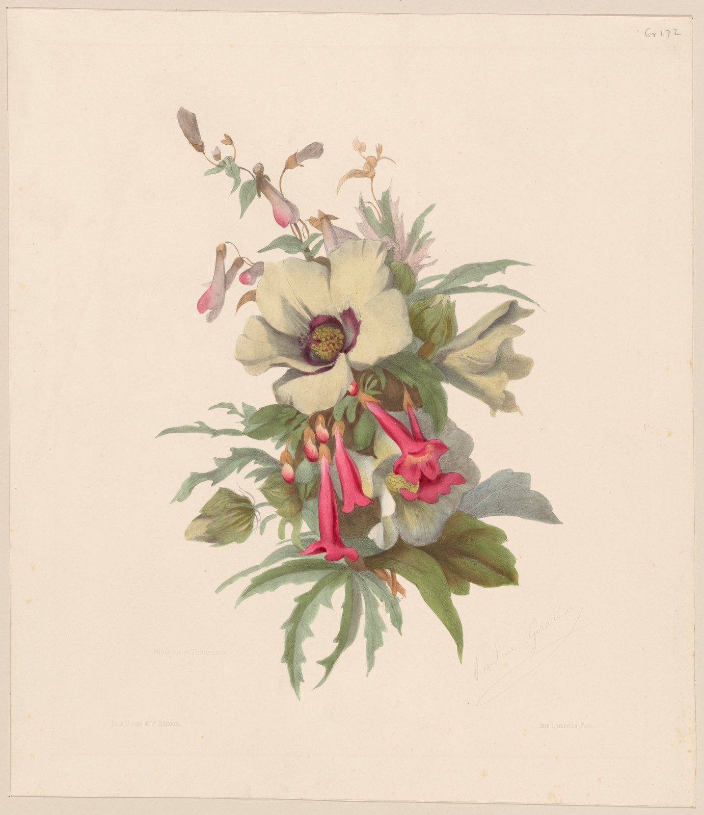nypl.digitalcollections.Hibiscus.jpg